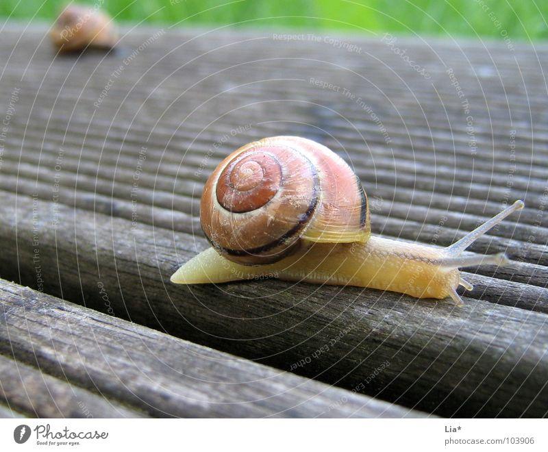 Neue Wege gehen Schneckenhaus Fühler krabbeln Zeitlupe Grenze Barriere erobern Tier Reptil schleimig anbiedern Schleim langsam Rennbahn Pause Abschied klein