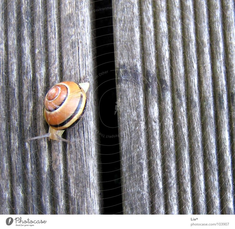 Grenzen überschreiten Tier Wege & Pfade klein Brücke Spuren Mut niedlich Barriere Schnecke Fühler krabbeln Reptil Schneckenhaus Schleim Überschreitung