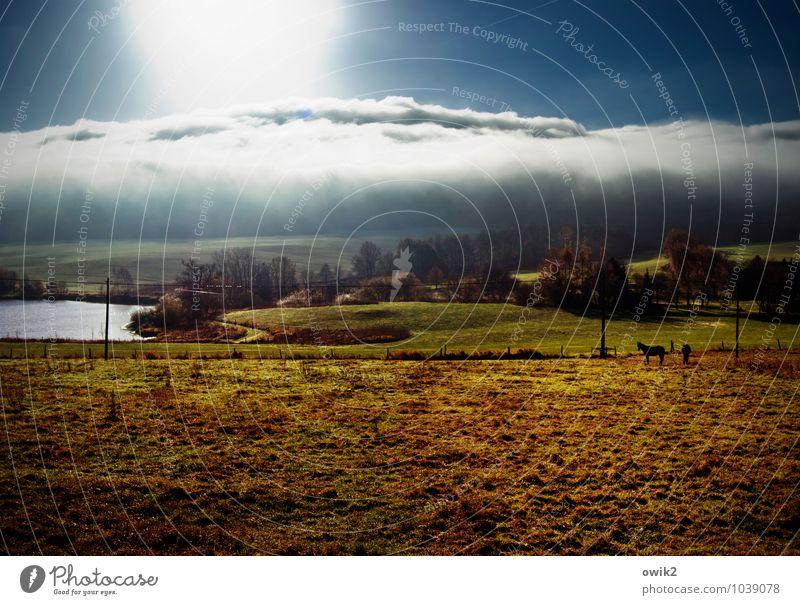 Weltall, Pferde, Mensch Himmel Natur Pflanze Baum Landschaft ruhig Wolken Haus Tier Ferne Umwelt Wiese Gras hell Horizont leuchten