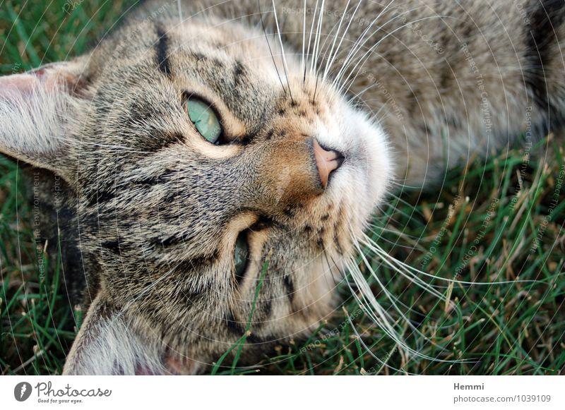 Wer stört? Katze Tier liegen schlafen Haustier Hauskatze Katzenauge Katzenkopf
