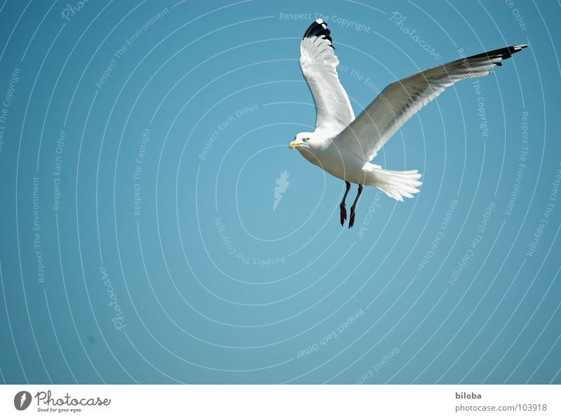 Über den Wolken schön Himmel weiß blau schwarz Tier Freiheit Vogel elegant fliegen frei hoch Unendlichkeit tief Möwe