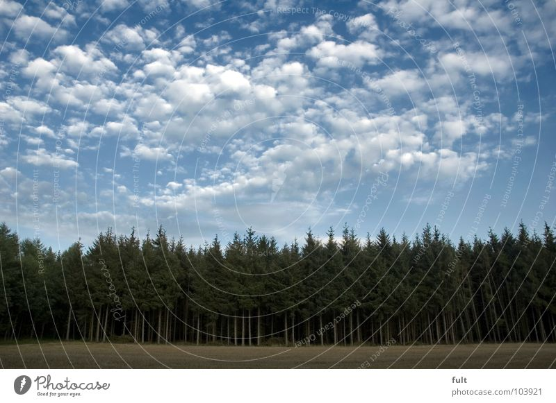 komm in den wald Natur Himmel Baum grün Wolken Wald Angst Europa gruselig Tanne Panik unheimlich
