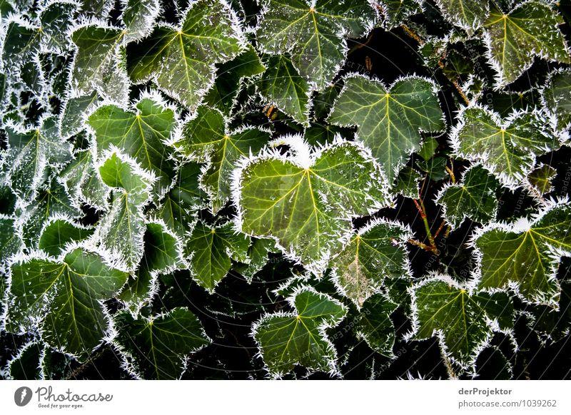Ich habe mal eben die Blätter gerahmt Natur Ferien & Urlaub & Reisen Pflanze grün Blatt Landschaft Tier Winter Umwelt Berge u. Gebirge Gefühle Glück Stimmung