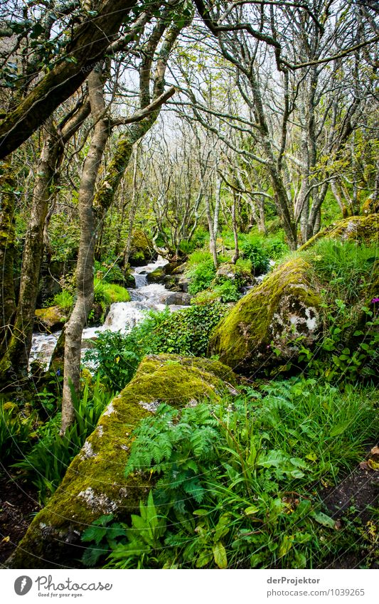 Moosiger Urwald mit Bach Ferien & Urlaub & Reisen Tourismus Ausflug Expedition Umwelt Natur Landschaft Pflanze Tier Urelemente Frühling schlechtes Wetter Baum