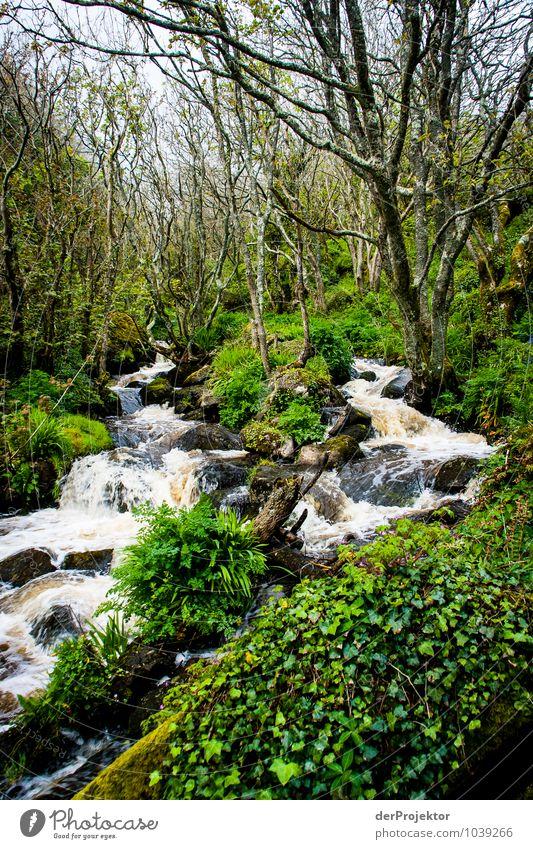 Wildes Cornwall Ferien & Urlaub & Reisen Tourismus Ausflug Sightseeing Expedition Camping Meer Insel Umwelt Natur Landschaft Pflanze Tier Urelemente Wasser