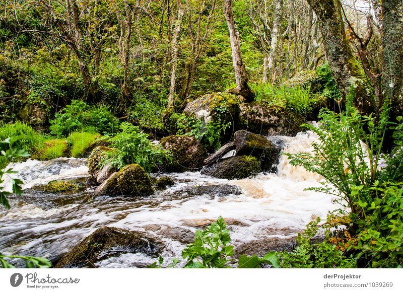 Uriger Bach mit bemoosten Wald Umwelt Natur Landschaft Pflanze Tier Urelemente Frühling schlechtes Wetter Baum Gras Moos Wildpflanze Urwald Wellen Insel Fluss