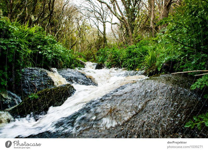 Wilder Bach in Cornwall Ferien & Urlaub & Reisen Tourismus Ausflug Abenteuer Safari Expedition Umwelt Natur Landschaft Pflanze Urelemente Frühling