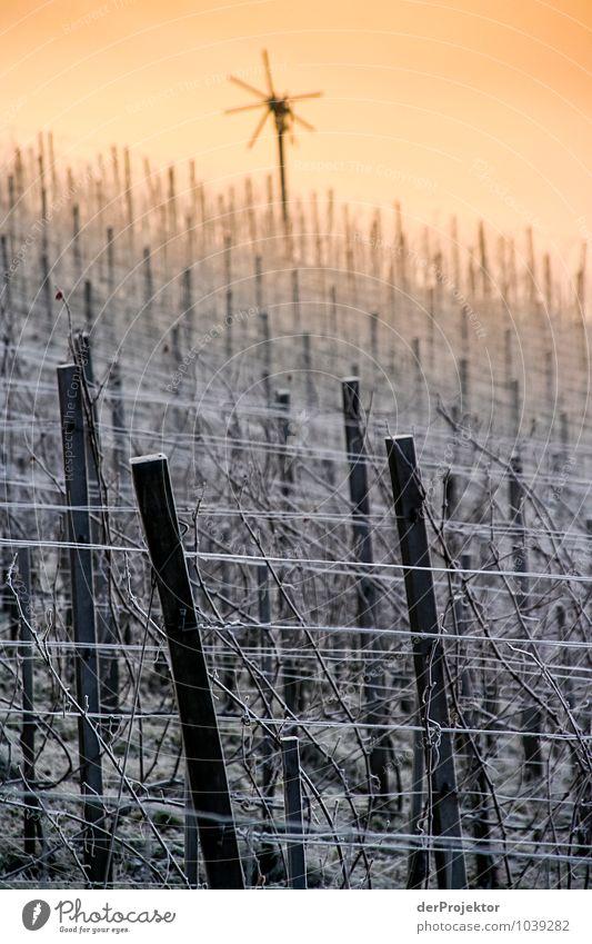 Klapotetz/Klapotek am winterlichen Weingarten Natur Pflanze Landschaft Tier Freude Winter Berge u. Gebirge Umwelt Gefühle Feld Eis genießen Lebensfreude Schönes Wetter Coolness Urelemente