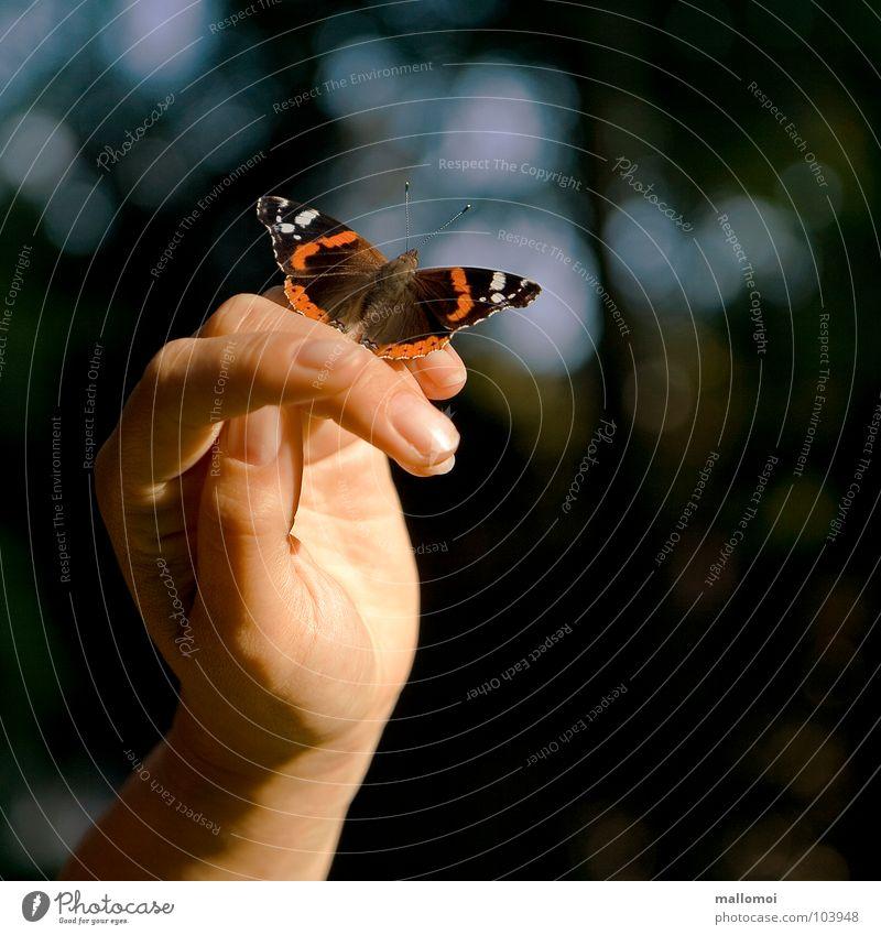 handzahm Haut Erholung ruhig Hand Finger Natur Schmetterling nah Gefühle Vertrauen Vorsicht Zufriedenheit Duft einzigartig Frieden Gelassenheit Glück Pause