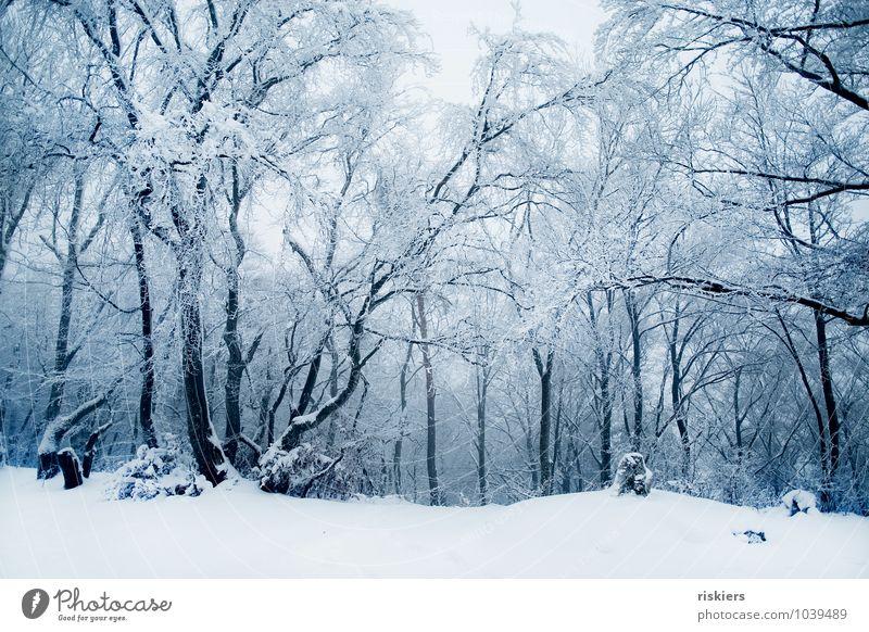 frozen forest Umwelt Natur Landschaft Winter Klima Schönes Wetter Eis Frost Schnee Schneefall Wald außergewöhnlich kalt natürlich schön blau ruhig träumen