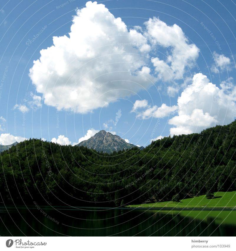 riviera royal XVI Gras Sommer Naturgesetz Wiese grün Umwelt Wolken Wildnis Himmel Grünfläche Österreich Wald Hügel Berge u. Gebirge Landschaft Pflanze Firmament