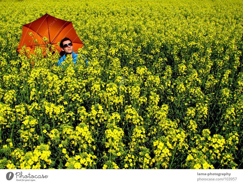 Summer Feeling Blume blau Pflanze Sommer Freude Ferien & Urlaub & Reisen ruhig Wolken gelb Farbe Erholung Wiese springen Blüte Frühling Freiheit