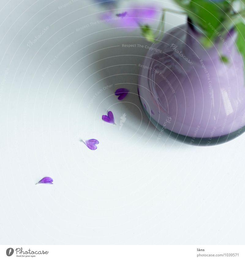 wir finden uns immer mehr Blume Liebe Blüte Herz Blühend Vase