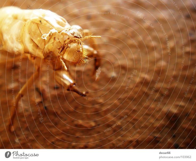 Alien Skin Sommer Insekt Außerirdischer Mars