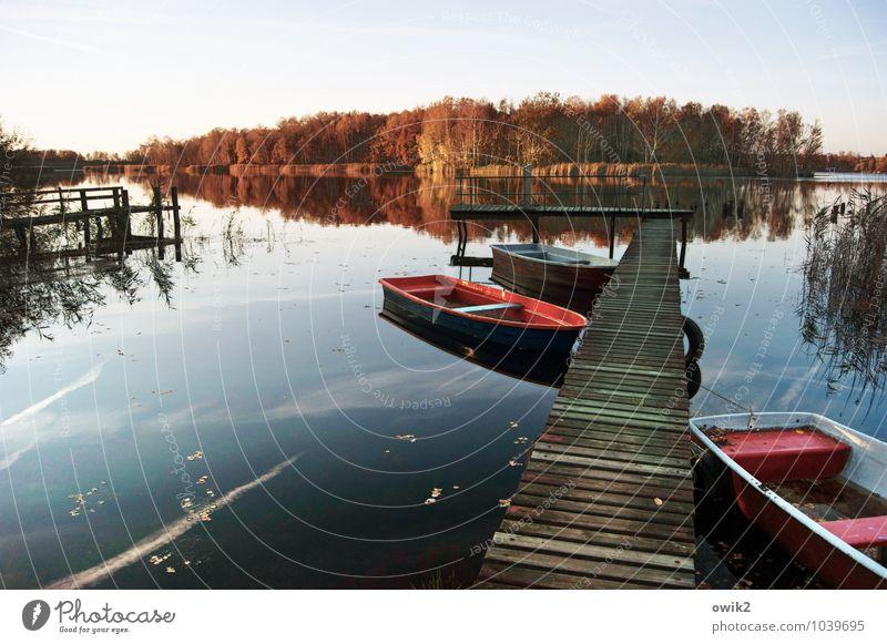 Landungsbrücken Umwelt Natur Landschaft Pflanze Wolkenloser Himmel Horizont Herbst Klima Schönes Wetter Baum Sträucher Wald Seeufer Insel Holz Erholung liegen