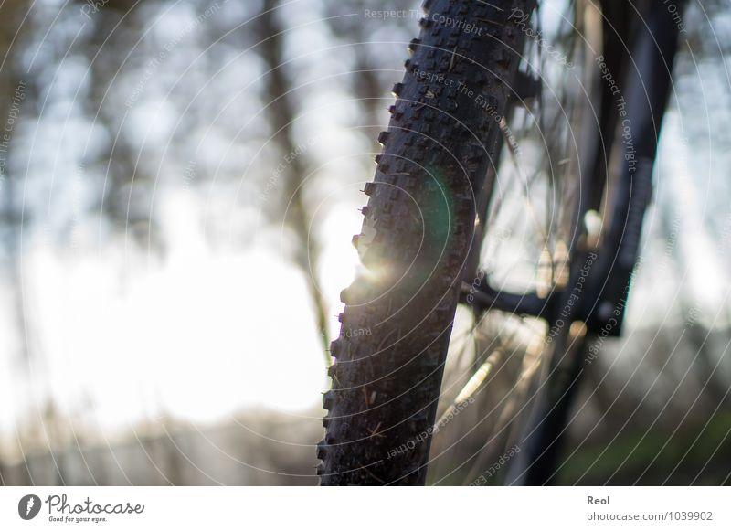 Radtour Sport Fitness Sport-Training Fahrradfahren Mountainbike Mountainbiking Wald Fußweg Reifen Reifenprofil Speichen Bewegung Ferien & Urlaub & Reisen braun