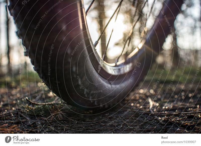 Radtour II sportlich Freizeit & Hobby Sport Fitness Sport-Training Fahrradfahren Mountainbike Mountainbiking Fußweg Wege & Pfade Sonne Sonnenlicht