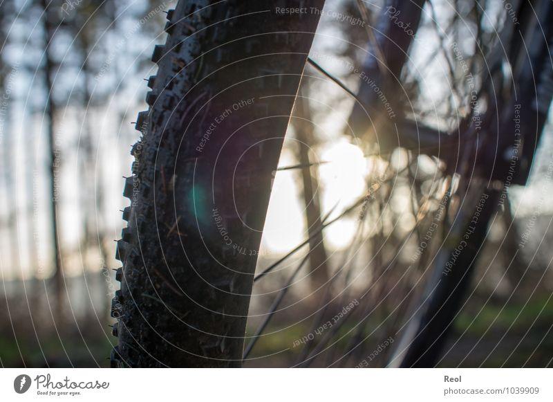 Radtour III Sonne schwarz Wald Bewegung Sport Freizeit & Hobby gold Fahrrad Geschwindigkeit Schönes Wetter Fitness Fahrradfahren Fußweg Fahrradtour sportlich