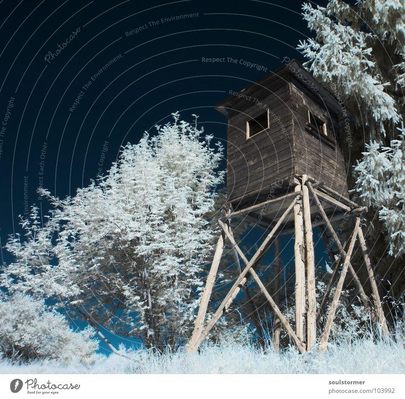 Wachturm Himmel weiß Baum rot schwarz Wolken Tier Wald Schnee Wiese Gras träumen Wege & Pfade Denken lustig Trauer