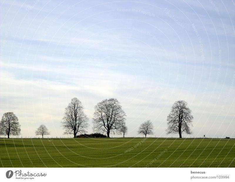 Zeugen am Horizont schön Himmel Baum grün blau ruhig Wolken Ferne Herbst Wiese Gras Landschaft Stimmung trist einfach