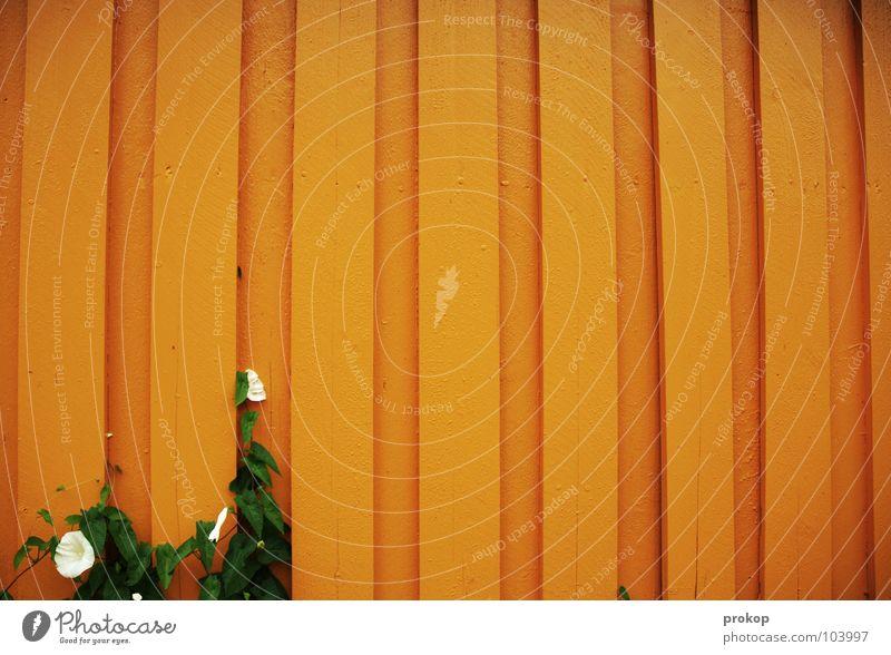 Minimum schön Blume Pflanze Wand Blüte Holz orange frei Wachstum Vertrauen Streifen Mut wenige Fuge Ausdauer sehr wenige