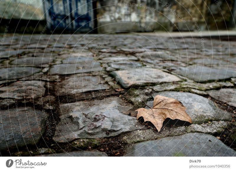 Treading warily on Rilke's paths Natur blau Blatt Umwelt Wand Herbst Wege & Pfade Mauer grau Zeit braun dreckig trist Tür Vergänglichkeit kaputt