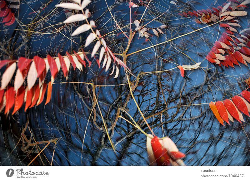 blattserie .. 4 Kunst Umwelt Natur Luft Himmel Herbst Sturm Baum Blatt außergewöhnlich blau rot Surrealismus rotieren Dynamik Zweige u. Äste leuchtende Farben