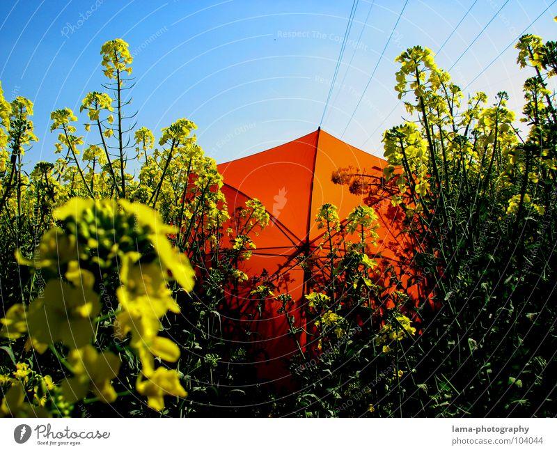 Fallen gelassen... Blume blau Pflanze Sommer Freude Ferien & Urlaub & Reisen ruhig Wolken gelb Farbe Erholung Wiese springen Blüte Frühling Freiheit