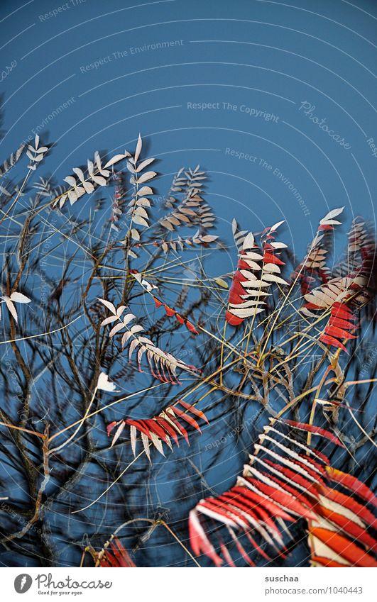 blattserie .. 7 Kunst Umwelt Natur Himmel Herbst Baum außergewöhnlich wild blau rot Surrealismus leuchtende Farben Farbfoto mehrfarbig Außenaufnahme Experiment