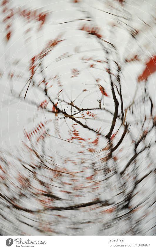 noch so'n verdrehdings Umwelt Natur Luft Himmel Herbst Blume grau rot rotieren Ast Zweig Blatt Dynamik Farbfoto Gedeckte Farben Außenaufnahme Experiment
