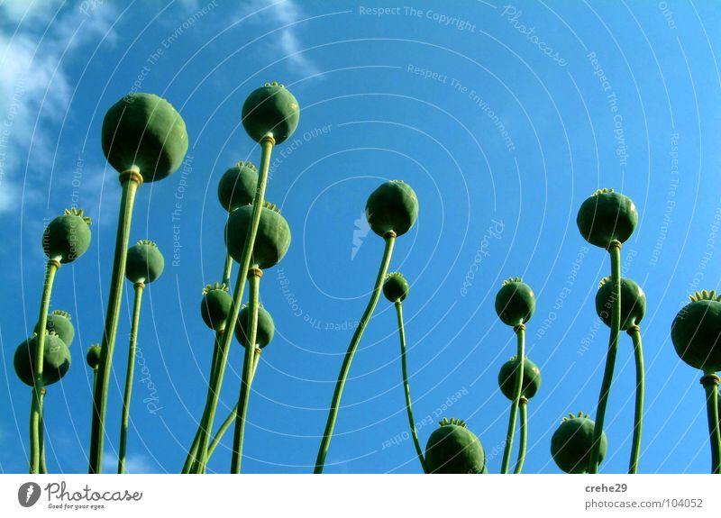 Sicht einer anderen Art & Weise Natur Himmel blau Pflanze Sommer Wolken Wiese Blüte Gras Landschaft