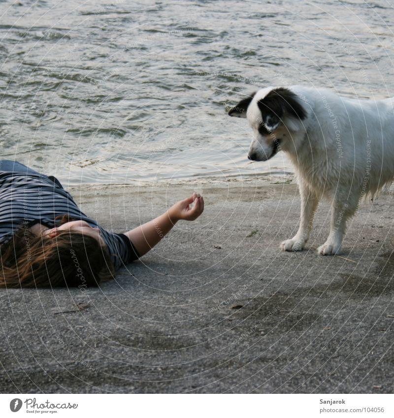 Lecker Fressi! Pubertät Hund grau Strand Beton Staustufe Wellen füttern Futter suspekt Vorsicht Kieselsteine Fressen Haustier weiß Fluss Wasser Abend Schatten