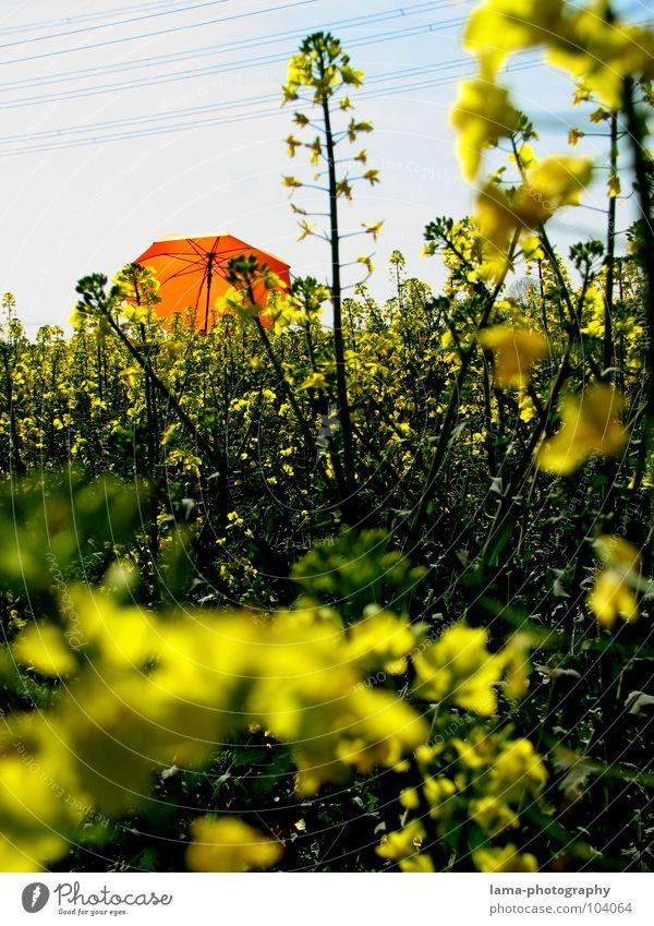 Raps-Urwald blau Ferien & Urlaub & Reisen Pflanze Sommer Blume Freude Farbe Wolken ruhig Erholung gelb Wiese Frühling Freiheit Blüte springen