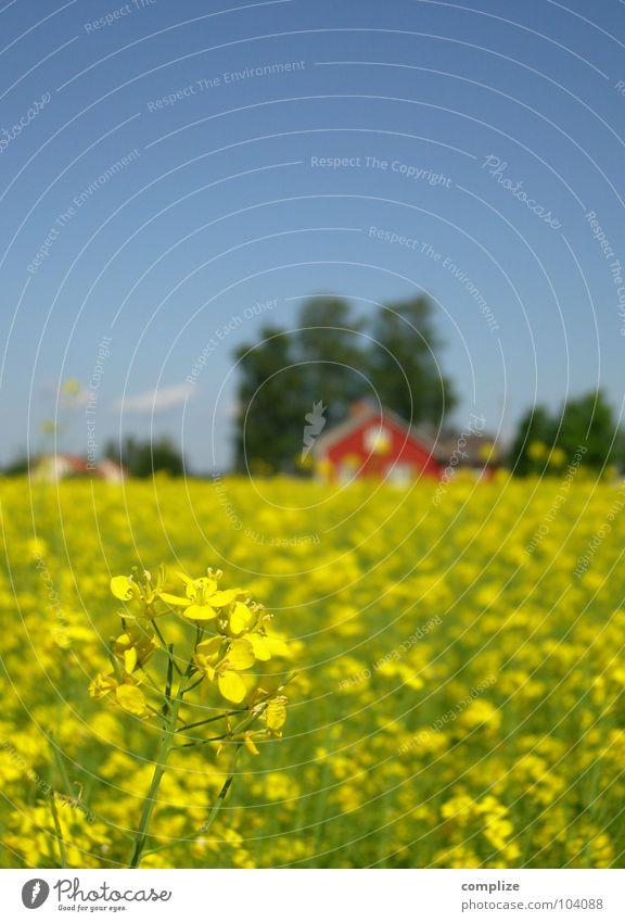 blau, grün, rot und gelb II Himmel Sommer Ferien & Urlaub & Reisen Haus Ferne Feld Horizont Energiewirtschaft Bauernhof Amerika Hütte Schweden Raps alternativ