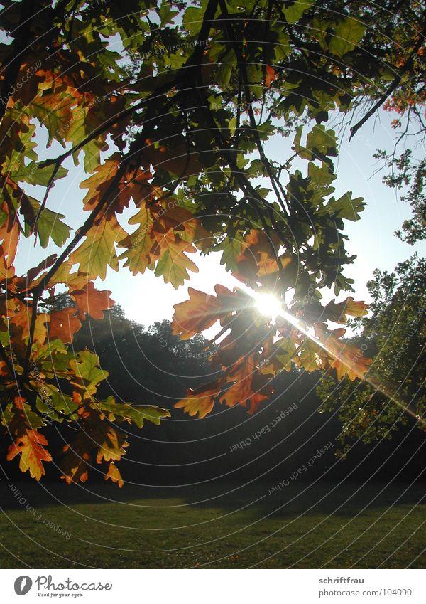 herbstsonne Himmel Baum Sonne Blatt Herbst Park Romantik Lichtstrahl