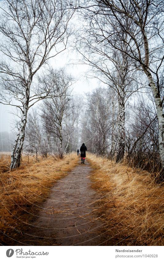 Duvenstedter Brook Mensch Natur blau weiß Baum Erholung Einsamkeit Landschaft Winter Herbst Wiese Gras Wege & Pfade natürlich Eis Freizeit & Hobby