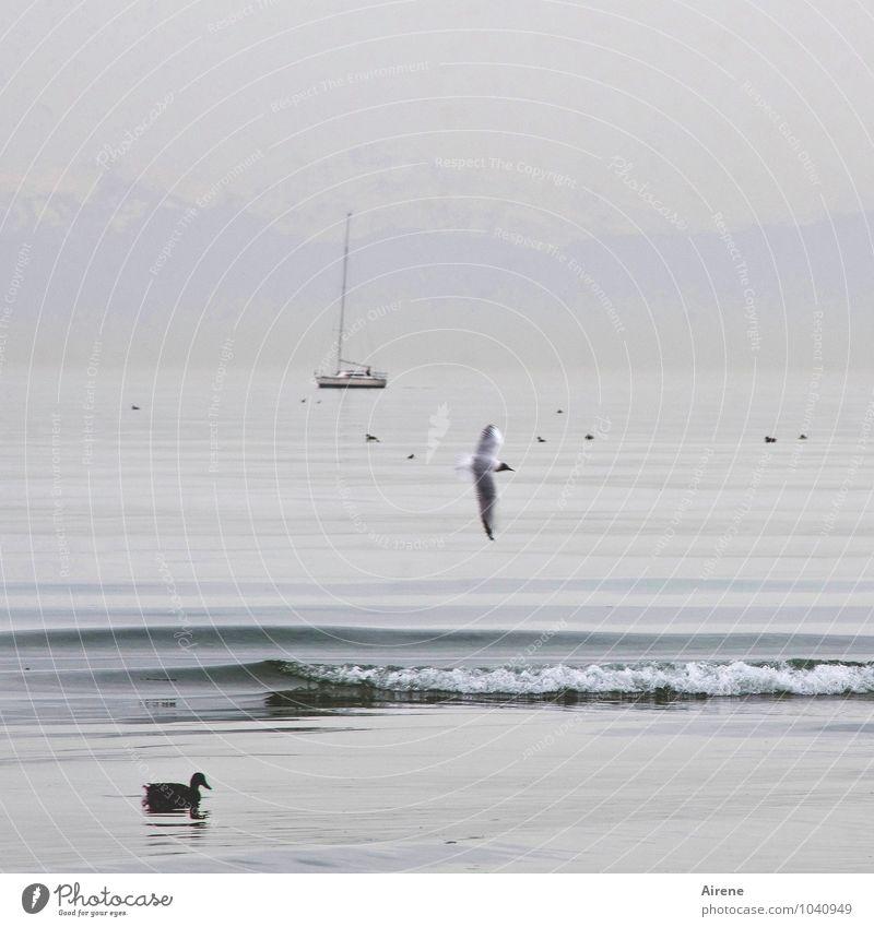 AST 7 | stiller See Sport Segeln Landschaft Wasser schlechtes Wetter Nebel Alpen Schneebedeckte Gipfel Seeufer Bodensee Schifffahrt Segelboot Tier Vogel Möwe