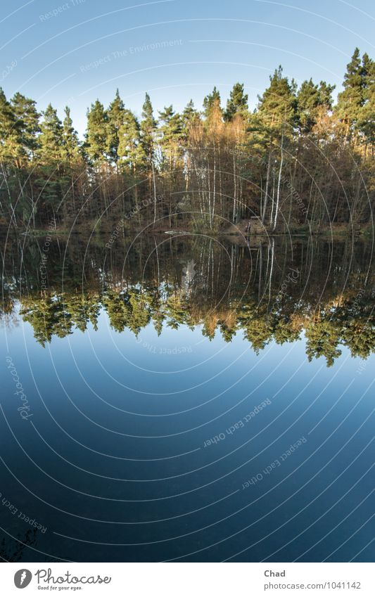 Stille Wasser Natur blau Pflanze grün Baum Erholung Einsamkeit Landschaft ruhig Umwelt Herbst Küste Schwimmen & Baden See Stimmung
