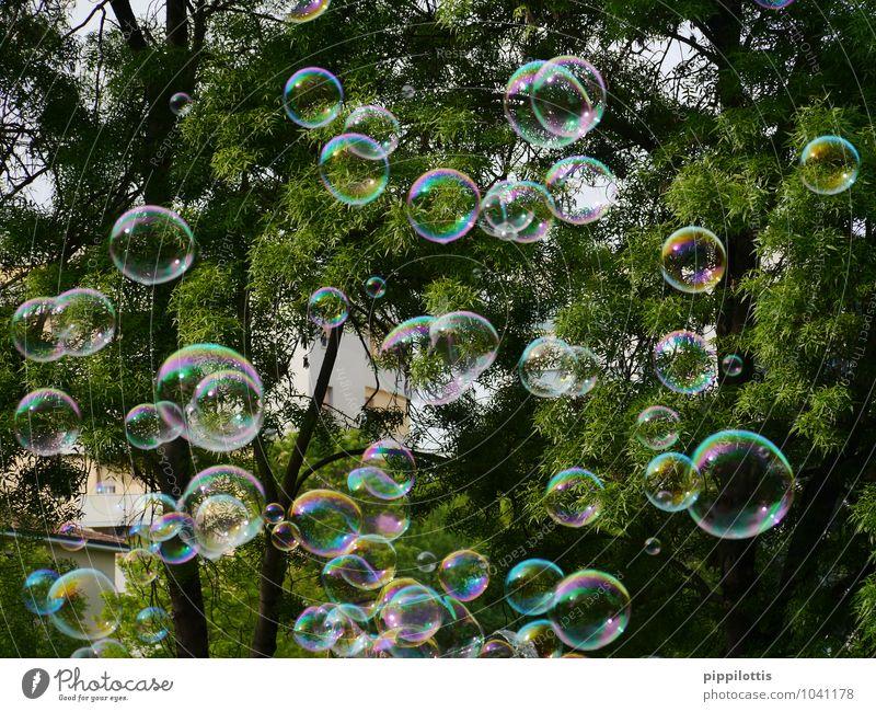 bubbles grün Baum Freude Leben Bewegung Spielen fliegen glänzend träumen frei Fröhlichkeit Lebensfreude Vergänglichkeit rund Wunsch Flüssigkeit