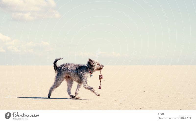 (s)chiller | sommerwindsüchtig Hund Himmel Ferien & Urlaub & Reisen Sommer Einsamkeit ruhig Wolken Freude Tier Strand Ferne Spielen Freiheit gehen Sand Luft