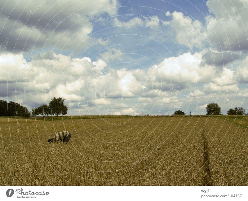 Übergang 3 Kreis Feld weiß Weizen Gerste Roggen Metamorphose Wolken Spuren Horizont Kunst Kunsthandwerk Jörg Himmel blau Getreide Traktorspur