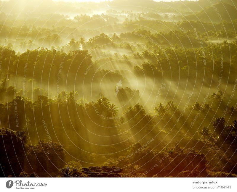 hold on... Natur grün Ferien & Urlaub & Reisen ruhig Farbe Wald Landschaft Erde Religion & Glaube Beleuchtung Nebel Frieden Asien Vertrauen Urwald