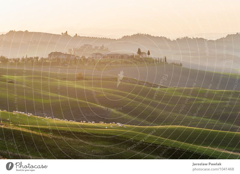 Himmel Natur grün schön Baum Landschaft Wolken Tier Haus Wiese Gras Horizont Aussicht Italien Hügel Dorf