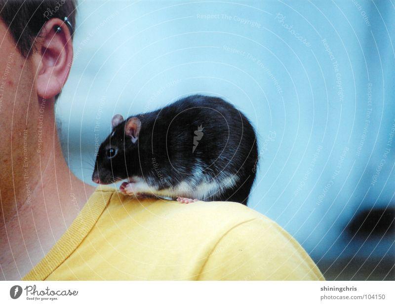 auf meinen schultern. Mensch blau Tier gelb Traurigkeit Denken Trauer Ohr Schulter Säugetier Nagetiere Ratte