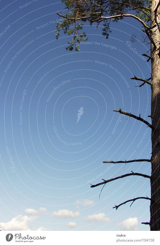 Baum Natur Himmel Wolken Berge u. Gebirge Landschaft Raum Ast gewachsen