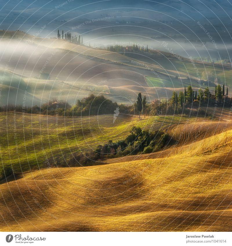 .... Morgen auf dem Hügel in der Toskana Natur Ferien & Urlaub & Reisen grün Baum Landschaft Haus Umwelt Herbst Frühling Nebel Tourismus Aussicht Europa Italien