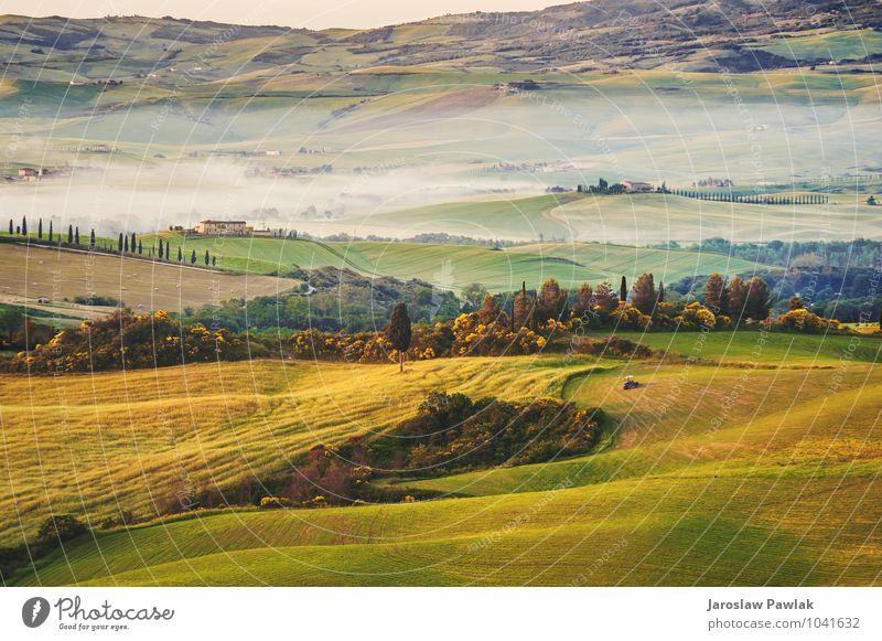 Toskanische Olivenbäume und Felder in der Nähe von Bauernhöfen, Italien ruhig Sommer Sonne Haus Umwelt Natur Landschaft Pflanze Himmel Wolken Baum Gras Wiese