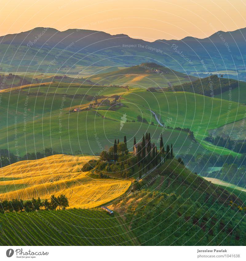 Toskanische Olivenbäume und Felder in den nahen Bauernhöfen, Italien Himmel Natur Pflanze grün Sommer Baum Sonne Landschaft Einsamkeit Wolken ruhig Haus Umwelt