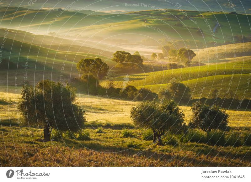 Natur Ferien & Urlaub & Reisen Pflanze schön grün Sommer Sonne Baum Landschaft ruhig Umwelt Herbst Wiese Frühling Freiheit Stimmung