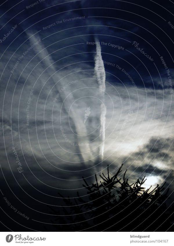 D-A-N-G-E-R-! Himmel Baum blau Sommer schwarz Wolken dunkel Traurigkeit Angst bedrohlich Streifen Tanne Gewitter Unwetter Panik unheimlich